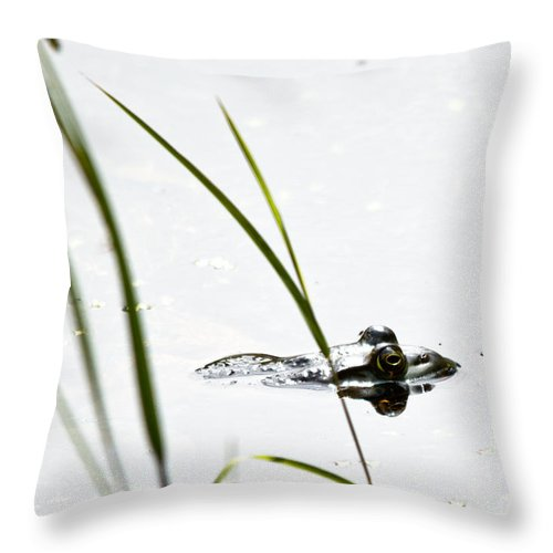 Frog Throw Pillow featuring the photograph Peeking Frog by Cheryl Baxter