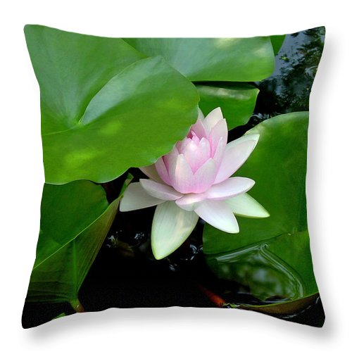 Water Lily Throw Pillow featuring the photograph Peeking Out by Suzanne Gaff