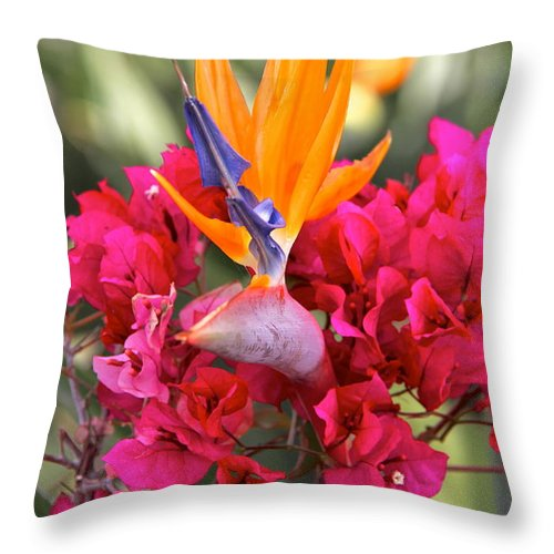 Purple Flowers Throw Pillow featuring the photograph Peeking Through by Suzanne Oesterling