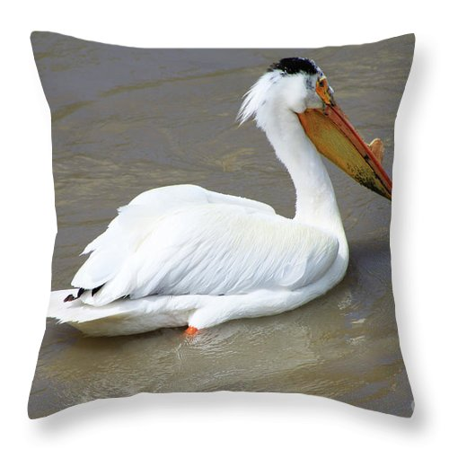 Bird Throw Pillow featuring the photograph Pelecanus Eerythrorhynchos by Alyce Taylor