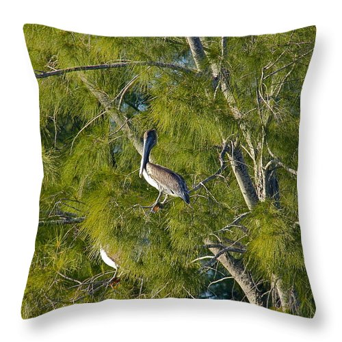 Pelican Throw Pillow featuring the photograph Pelican In The Trees by Denise Mazzocco