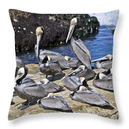 Pelican Throw Pillow featuring the photograph Pelican Rock by David Berg