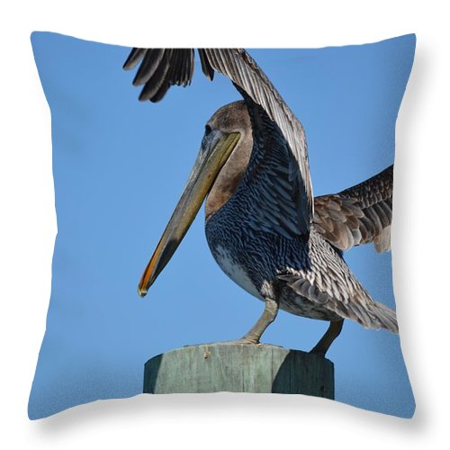 Brown Pelican Throw Pillow featuring the photograph Pelican Stretch by Linda Kerkau