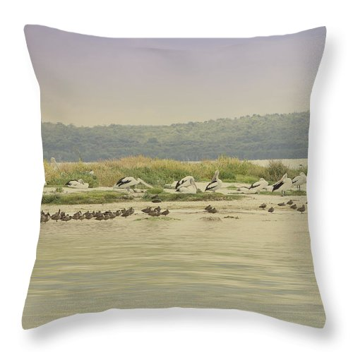 Birds Throw Pillow featuring the photograph Pelicans At Poddy Shot by Elaine Teague