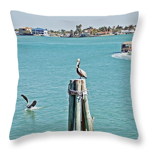 Pelican Throw Pillow featuring the photograph Pelicans Rule by Aimee L Maher ALM GALLERY