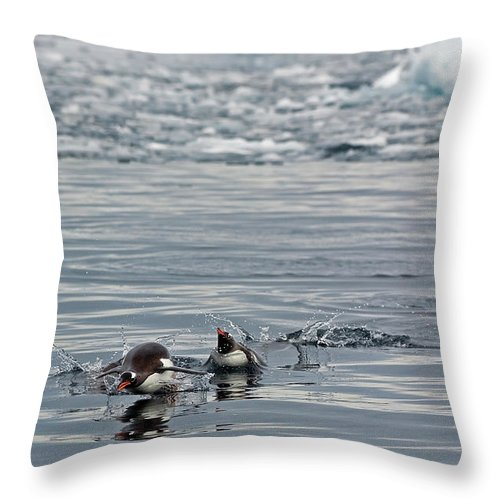 Iceberg Throw Pillow featuring the photograph Penguins In The Water by Jim Julien / Design Pics