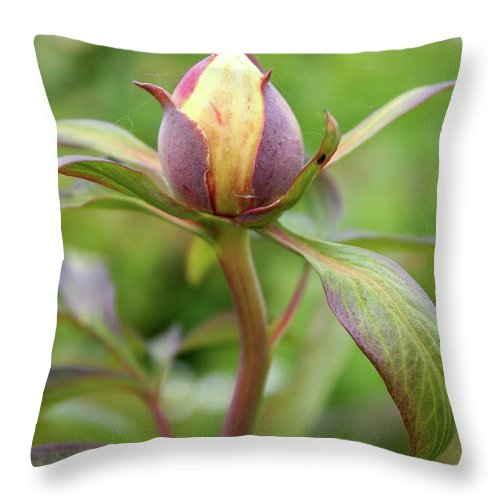 Peony Throw Pillow featuring the photograph Peony Bud by Christiane Schulze Art And Photography