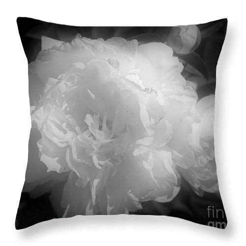 Peony Throw Pillow featuring the photograph Peony Flower Phases Black And White Contrast by Smilin Eyes Treasures
