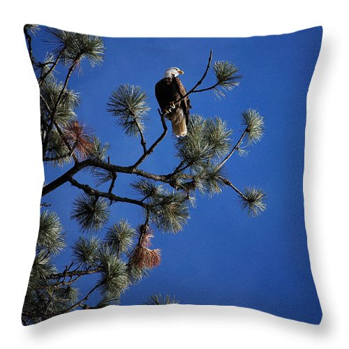 Bald Eagle Throw Pillow featuring the photograph Perched II by Sharon Elliott