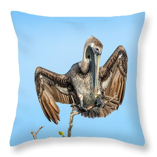 Brown Pelican Throw Pillow featuring the photograph Perched Pelican by Cheryl Schneider