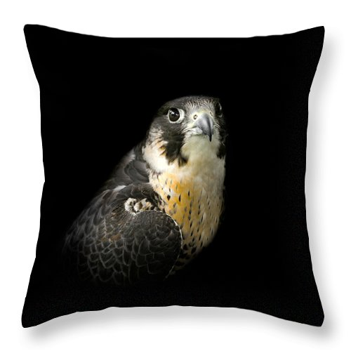 Falcon Throw Pillow featuring the photograph Peregrine Falcon by Bill Wakeley