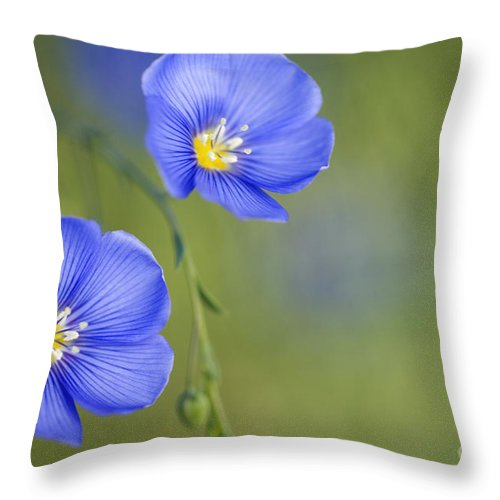 Flower Throw Pillow featuring the photograph Perennial Flax Flowers by Inga Spence