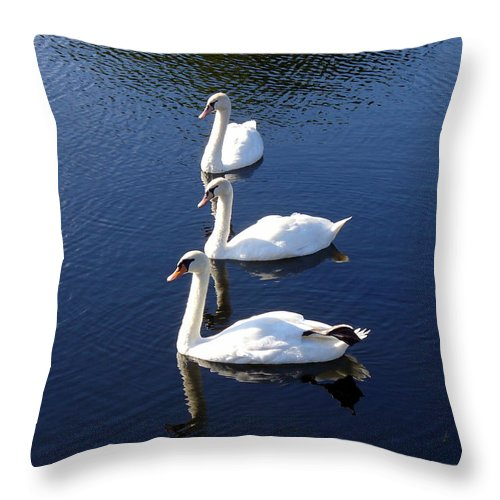 Swan Throw Pillow featuring the photograph Perfect Family Gathering by Lingfai Leung