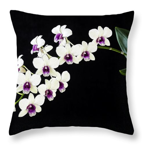 Orchids Throw Pillow featuring the photograph Perfect Phalaenopsis Orchid Poster by Rich Franco