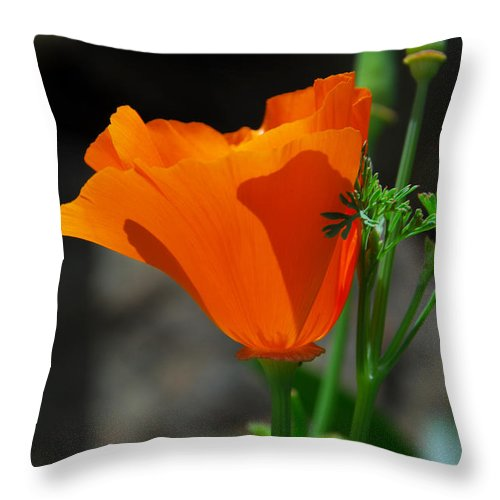 Poppy Throw Pillow featuring the photograph Perfect Poppy by Lynn Bauer