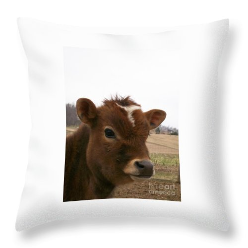 Cow Throw Pillow featuring the photograph Perfect Stance by Sara Raber