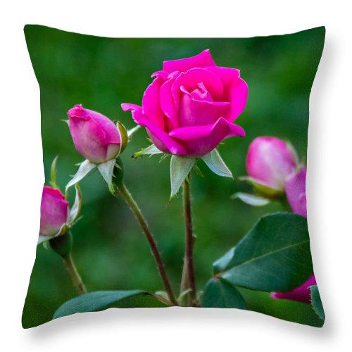 Steve Harrington Throw Pillow featuring the photograph Perfectly Pink 2 by Steve Harrington