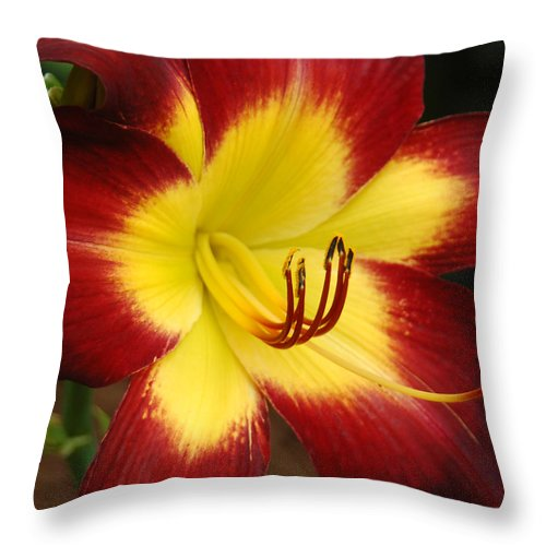 Red Throw Pillow featuring the photograph Persian Ruby by Suzanne Gaff