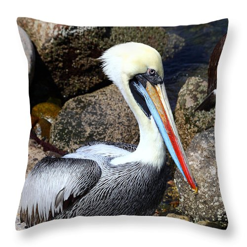 Pelican Throw Pillow featuring the photograph Peruvian Pelican by James Brunker
