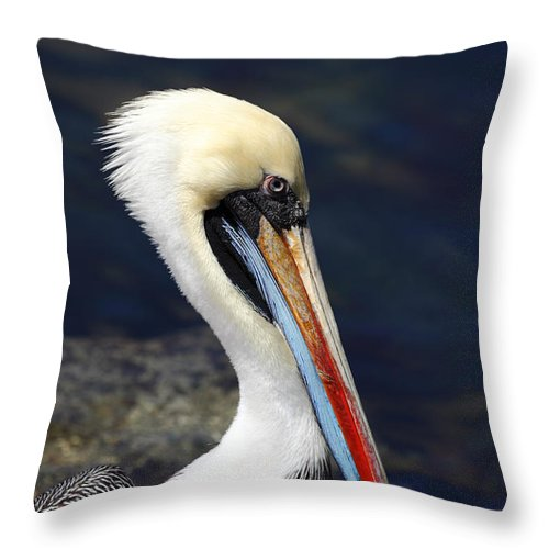 Pelican Throw Pillow featuring the photograph Peruvian Pelican Portrait by James Brunker