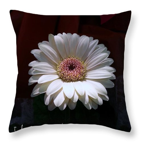 Throw Pillow featuring the photograph Petals by Renee Trenholm