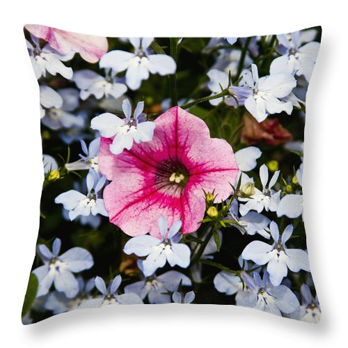 Petunia Throw Pillow featuring the photograph Petunia And Friends by Dennis Coates