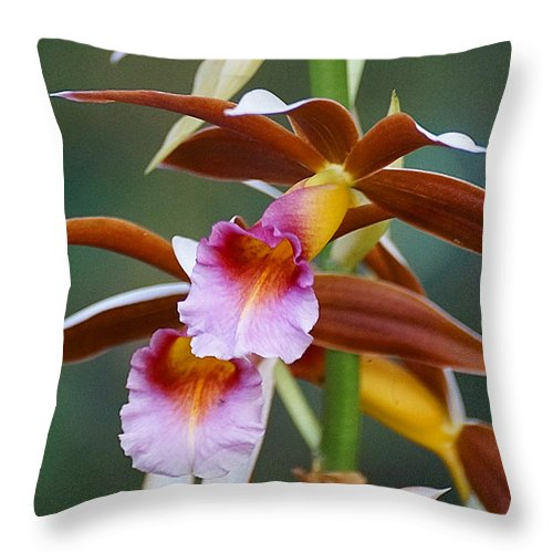 Orchid Throw Pillow featuring the photograph Phaius Tankervilliae Orchid by Blair Wainman