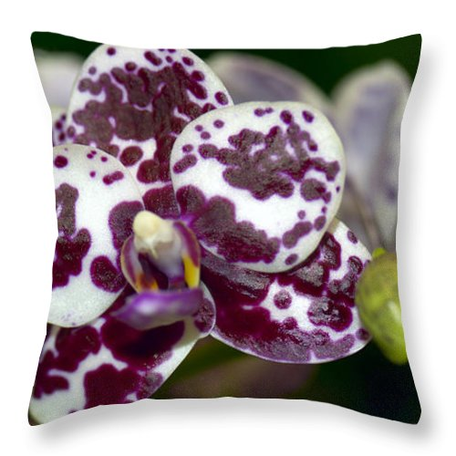Orchid Throw Pillow featuring the photograph Phal. Brother Redland Spots by Terri Winkler