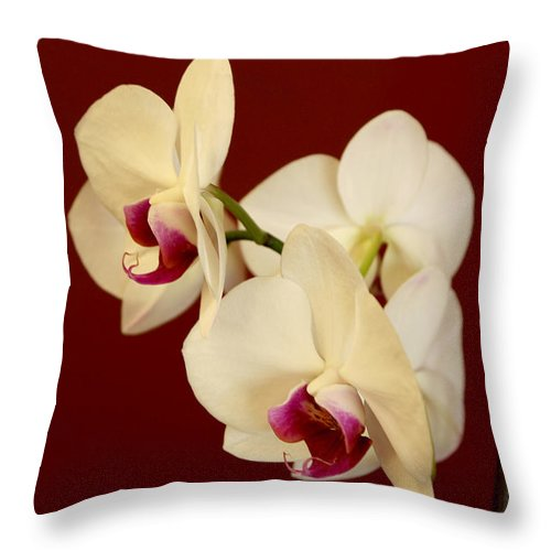 Phalaenopsis Throw Pillow featuring the photograph Phalaenopsis by Janice Byer