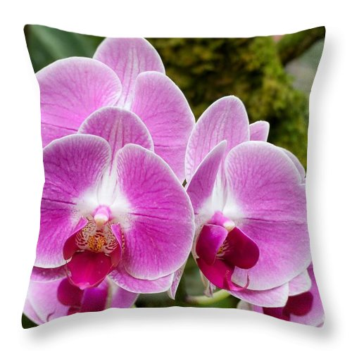 Orchid Throw Pillow featuring the photograph Phalaenopsis Orchid Hawaii All Profit Benefit Hospice Of The Calumet Area by Joanne Markiewicz