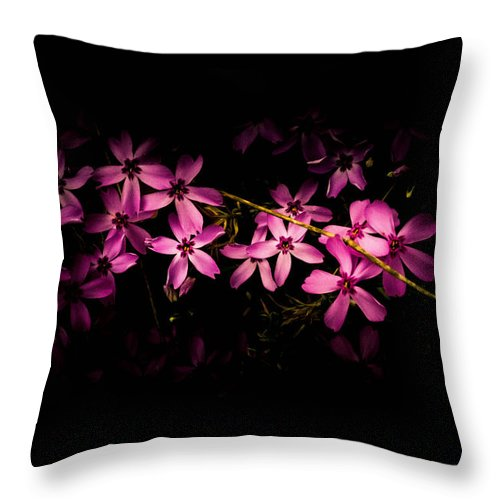 Phlox Throw Pillow featuring the photograph Phlox by Sherman Perry
