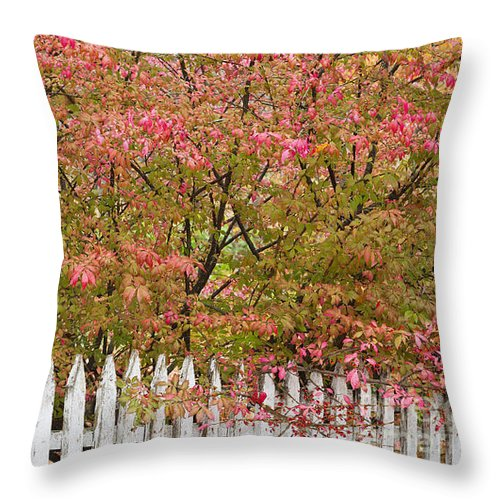 Fence Throw Pillow featuring the photograph Picket Fence Fall by Alan L Graham