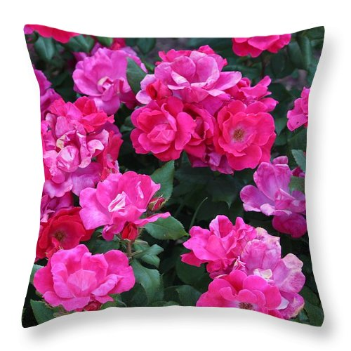 Picture Throw Pillow featuring the photograph Picture Perfect by Cynthia Guinn