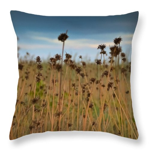 Field Throw Pillow featuring the photograph Pieces Of Light by Melanie Moraga