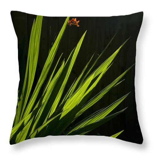 Reeds Throw Pillow featuring the photograph Piercing Green by Peter Lloyd