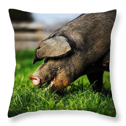Pig Throw Pillow featuring the photograph Pig Eating by Jimss