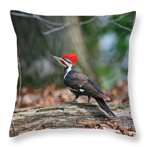 Pileated Throw Pillow featuring the photograph Pileated Woodpecker On Log by Timothy Flanigan