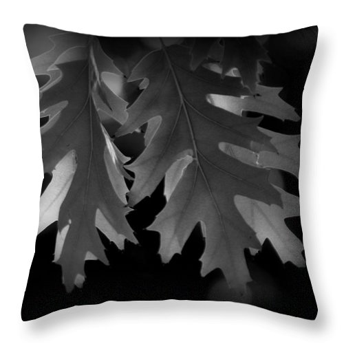 Pin Throw Pillow featuring the photograph Pin Oak Leaves by Nathan Abbott