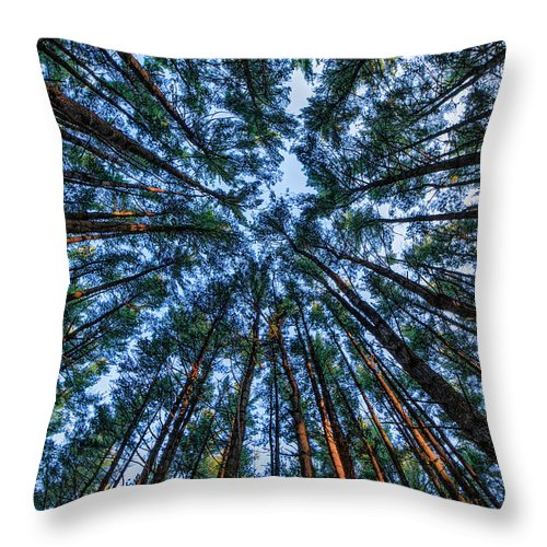 Pine Throw Pillow featuring the photograph Pine Explosion by Everet Regal
