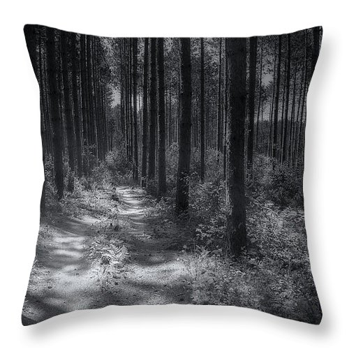 Trees Throw Pillow featuring the photograph Pine Grove by Scott Norris