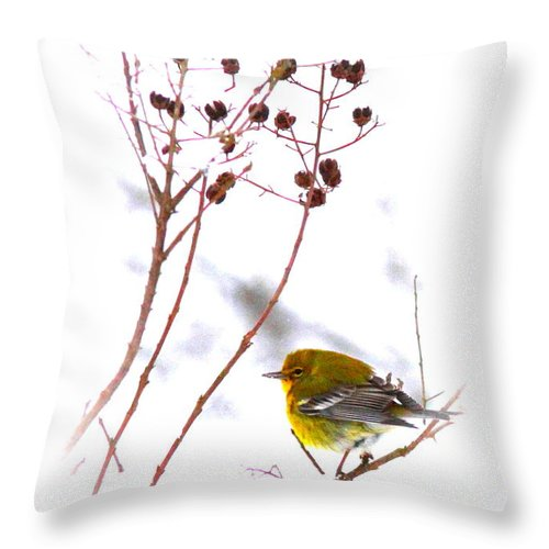 Pine Warbler Throw Pillow featuring the photograph Pine Warbler-img-2143-001 by Travis Truelove