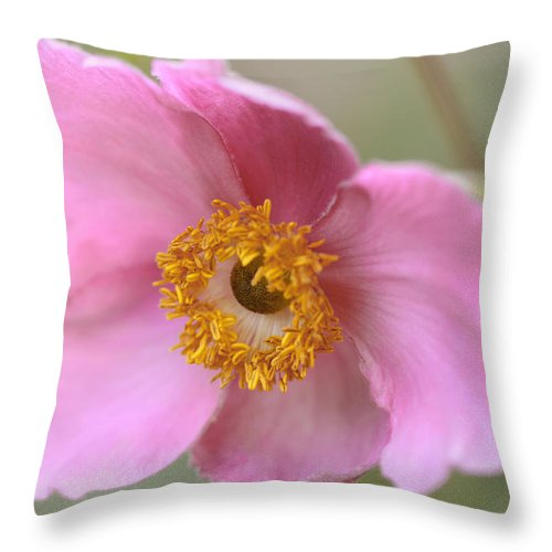 Floral Throw Pillow featuring the photograph Pink-a-boo by Janice Bajek