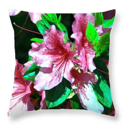 Pink Throw Pillow featuring the photograph Pink And Green by Darrell Clakley