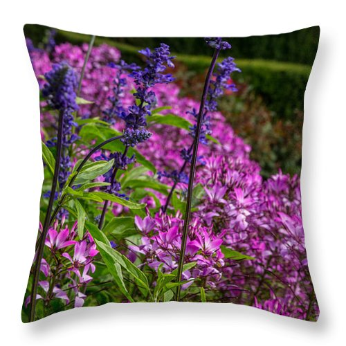Flowers Throw Pillow featuring the photograph Pink And Purple by Beverly Tabet