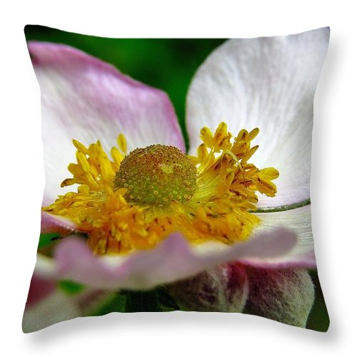 Flower Throw Pillow featuring the photograph Pink Anemone by J L Kempster