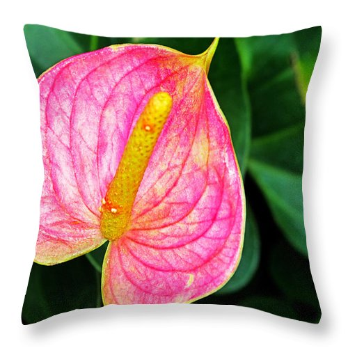 Flowers Throw Pillow featuring the photograph Pink Anthurium by Rich Walter