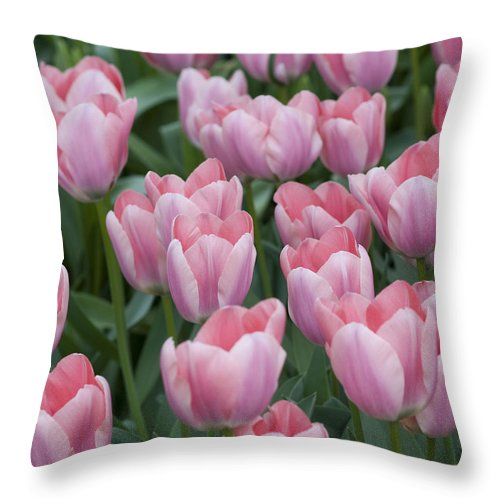 Pink Throw Pillow featuring the photograph Pink Beauties by Juli Scalzi