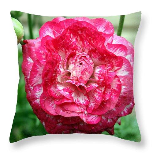 Pink Throw Pillow featuring the photograph Pink Beauty by Bob Slitzan