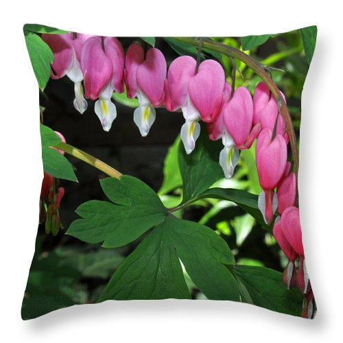 Flowers Throw Pillow featuring the photograph Pink Bleeding Hearts by Diane Lent