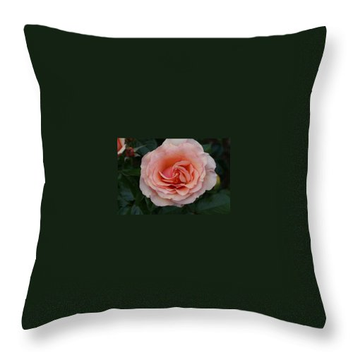 Pink Rose Throw Pillow featuring the photograph Pink Blush Rose I by Jacqueline Russell